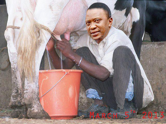 Uhuru apparently now believes that milking cows at the family's Brookside farms is better than the Hague project