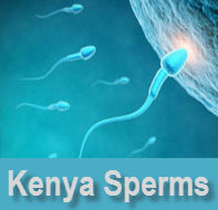 kenya sperms